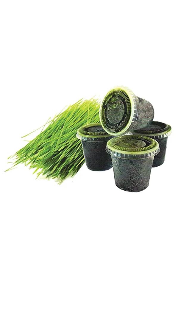 Wheatgrass cup - Bevroren